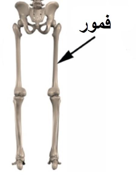 شکستگی ساقه استخوان ران چیست؟